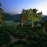 Gardens of Marqueyssac ~ Candlelit Evenings