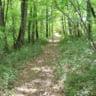 woodlands la Métairie des Songes Lot